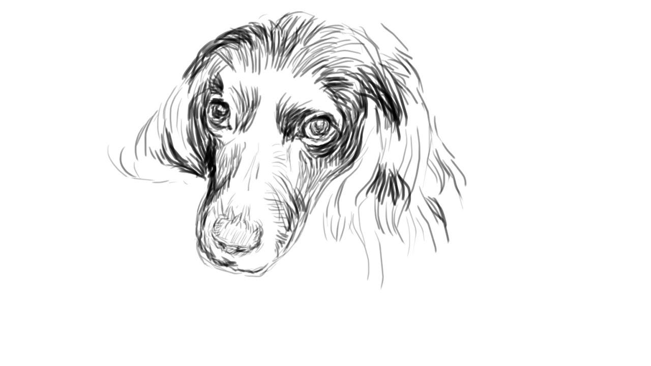 Рисовать собаку фотошопе