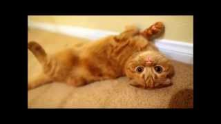 Những chú mèo ngộ nghĩnh nhất