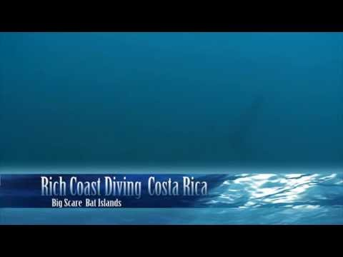 bull-sharks-at-big-scare-in-costa-rica.html