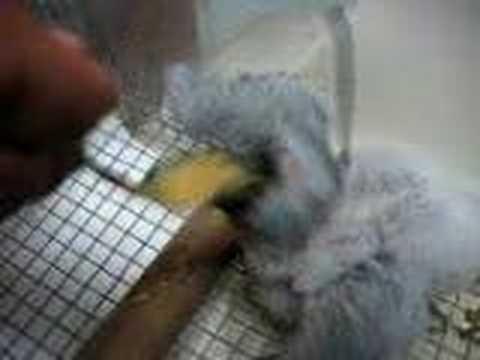 Πως να ταΐσετε ένα μωρό παπαγάλο