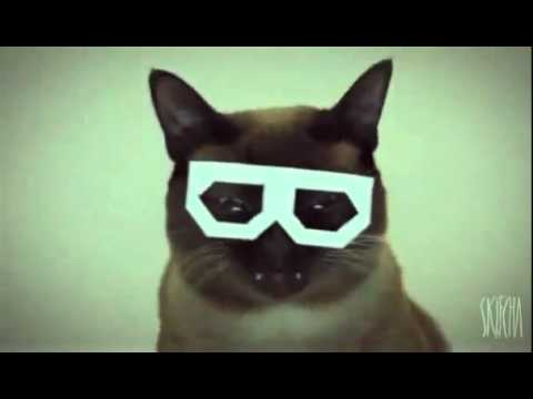 Dubstep Hipster Cat