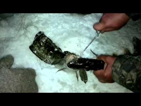 рыбалка на урале на резинку видео