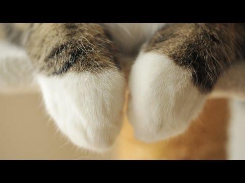 猫のまるちゃんは器用な前...