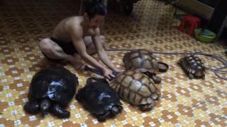 Tắm cho hai loài rùa khổng lồ ^^
