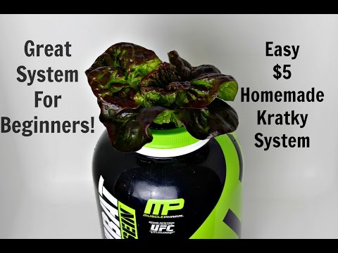 Easy $5 Homemade Hydroponics System DIY  in 5 Minutes Kratky Method