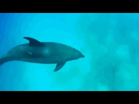Egypt Red Sea Hurghada Panasonic Egypt  Video Film
