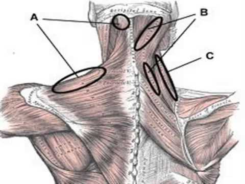 Back Rib Pain Right Side Right Side Upper Back Pain