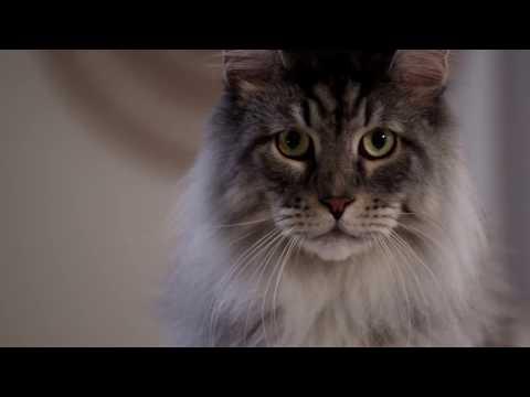 Catspiracy: The PetSafe ScoopFree Poop Harvesting Machine