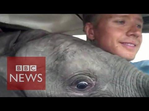 Baby elephant that 'flew'