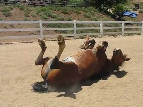 Just A Horse Passing A Colossal Amount Of Gas