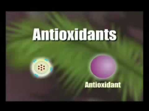 How Antioxidants Work - acai berry - www.RealHealthAnswers.com