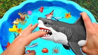 Learn Colors With Wild Animals Blue Water Shark Toys Learn Colors For Kids Children