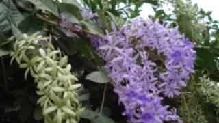 Exposición de decoración de jardines