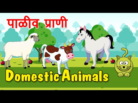 Types Of Domestic Animals In Marathi - Animation Video For Kids video