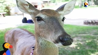 Sweetest Rescued Deer Helps Mom Overcome Cancer   The Dodo