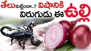 తేలు కుట్టిందా ..? విషానికి విరుగుడు ఈ ఉల్లి  || Scorpion Poison Natural Antidote This Raw Onion