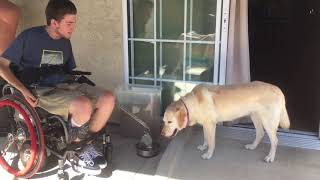 Quadriplegic Feeds His Dog