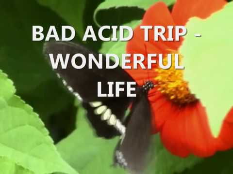 Bad Acid Trip - Wonderful Life