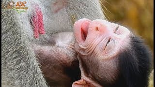 Even mom Jane not reject, Why newborn baby Janet cry not get milk when hungry like this.