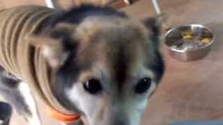 【譲渡決定_犬】サオリン