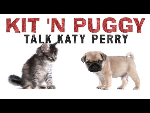 Katy Perry - Kit 'N Puggy