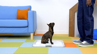 How to Potty Train Your Puppy With Potty Pads
