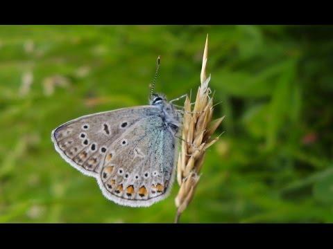 Paradies vor der Haustür - Natur im Garten (HD)