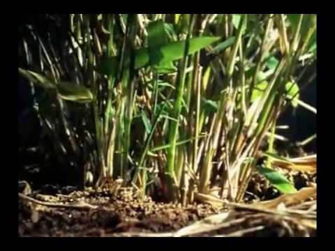 Oso Panda(Documental)Primera Parte