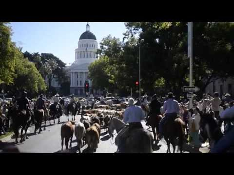 Farm-To-Fork Week Kicks Off With Capitol Cattle Drive