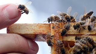 What Happens if Bees Keep Dying?