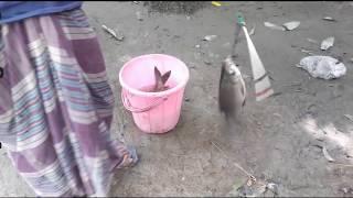 Live  fishing video in village Bangladesh part 5 # daily village life#