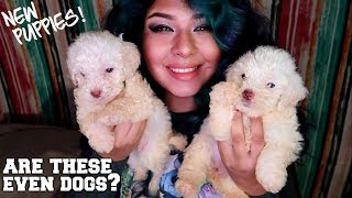 POLAR BEARS OR PUPPIES? WHERE DID THEY COME FROM? meet Nolan and Emilia