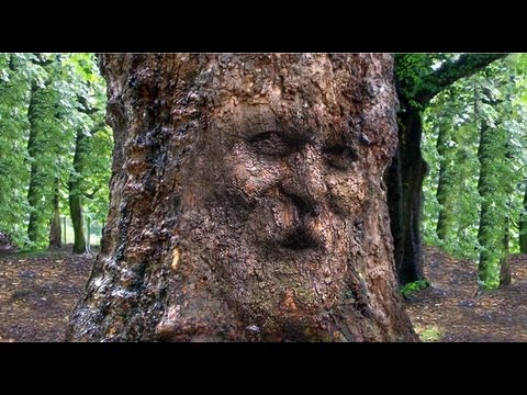 Photoshop: How to Camouflage a Face onto Gnarly, TREE Bark