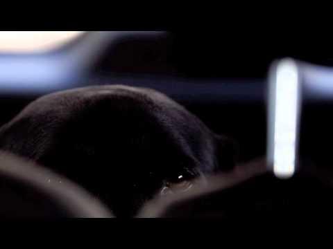 R&M?DogPhoto 5DMark2+7D (360p) No.003