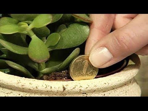 Diese Pflanze soll Geld und Wohstand bringen!