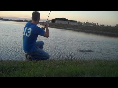 Bass Fishing with a Shad Swim Bait