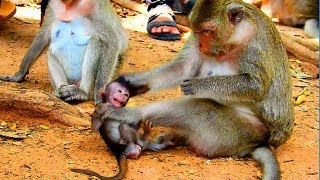 Baby Crying Loudly Cos Mum Fight Her, Poor Baby Mommy Hit Her , Baby Very Hurt Primitive Monkey