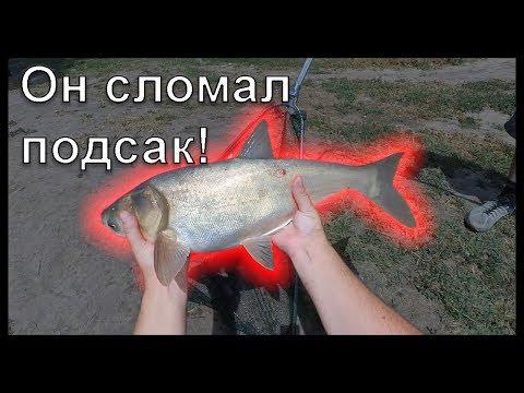Толстолобы Рыболовные Хроники (часть вторая)