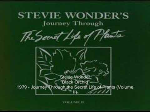 Stevie Wonder - Black Orchid