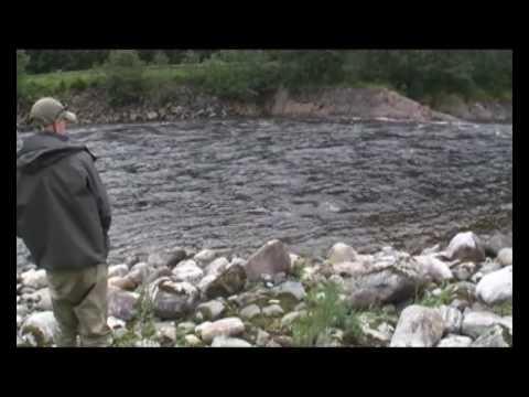 Norwegian Flyfishers Club - Gaula Salmon - Salmon 8,2 kg caught by Daniel Persson