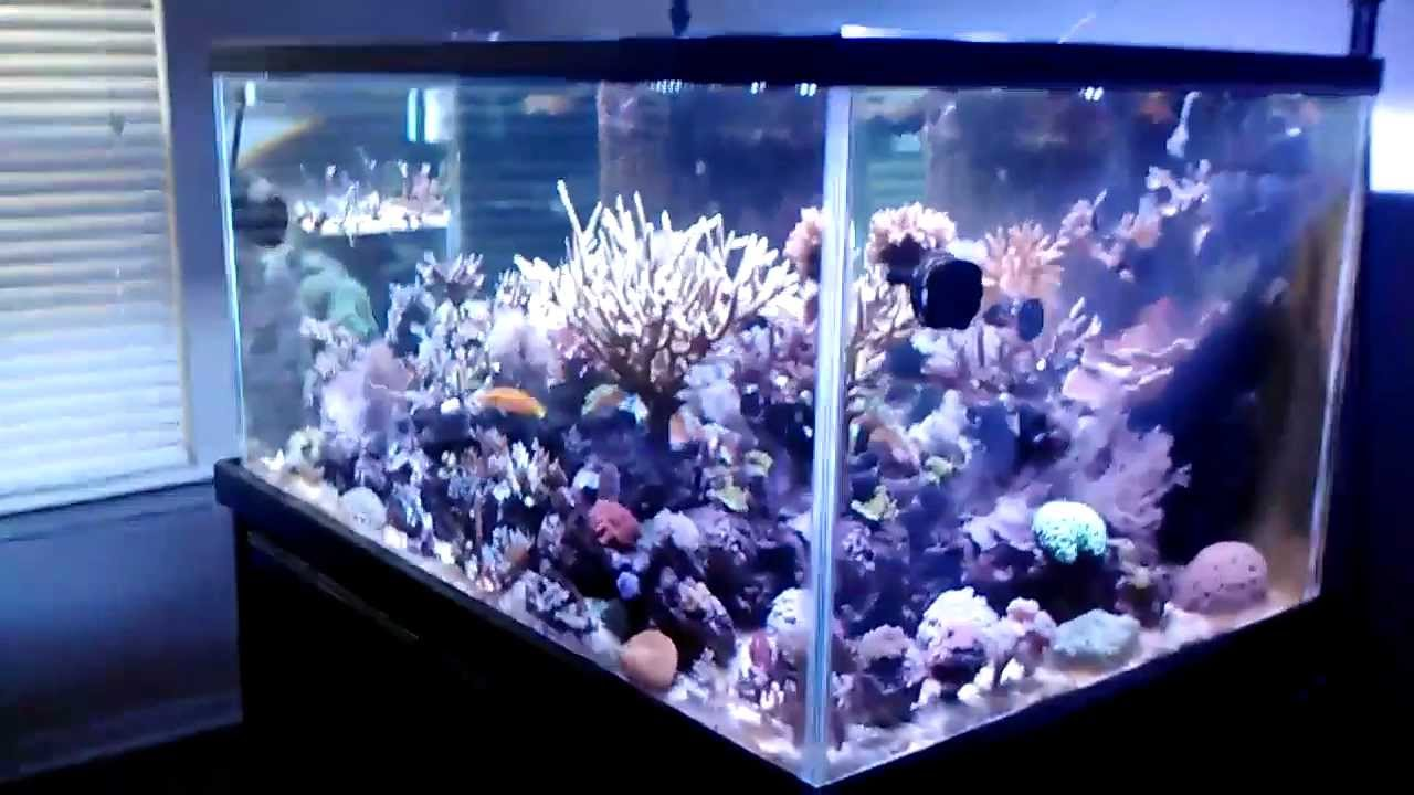 Raccoh 39 s 150 gallon mixed reef aquarium youtube for 20 gallon fish tank dimensions