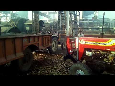 Tractor trolley se Ganna(step by step) kaise cren uthati h.(Daurala sugar mil)