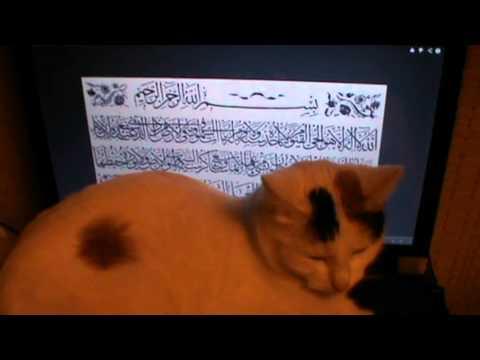 Рита Милорадович представляет: кошка слушает азан