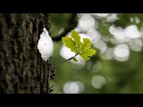Eichenprozessionsspinner Im Garten - Was Tun / Eichenprozessionsspinner Selber Bekämpfen Entfernen?