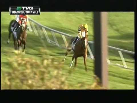 2012 Shadwell Turf Mile Stakes - Wise Dan