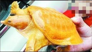 Tát được rùa vàng ở ao, thương tình thả đi nhưng 5 ngày sau nó về báo ơn khiến cả nhà mừng khôn xiết