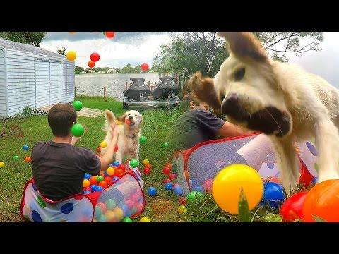 Golden Retriever Puppy and 300 Ball Pit Balls! (Super Cooper Sunday #38)