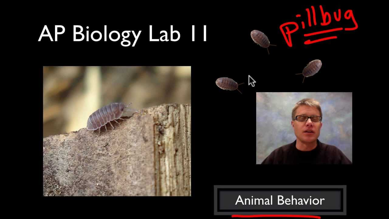 ap biology lab 11 animal behavior This is a lab performed by ap biology students that is used to understand the movement or activity of an organism in response to a stimulus (kinesis) and the.