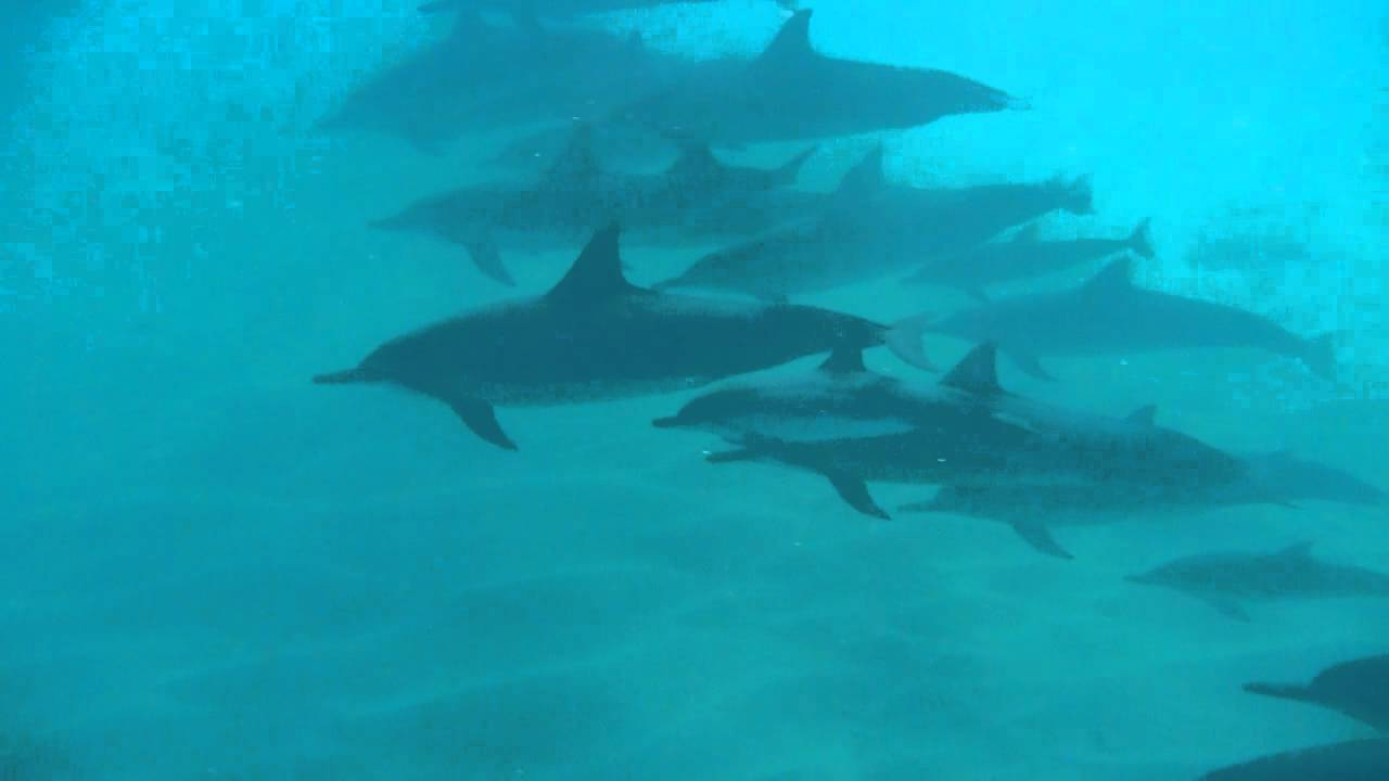 イルカの画像 p1_17