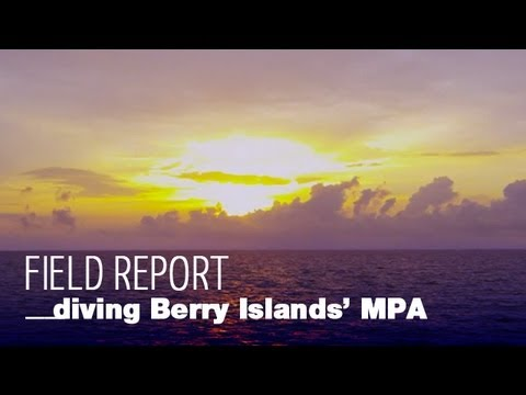 Diving Berry Islands' Marine Protected Area - Bahamas